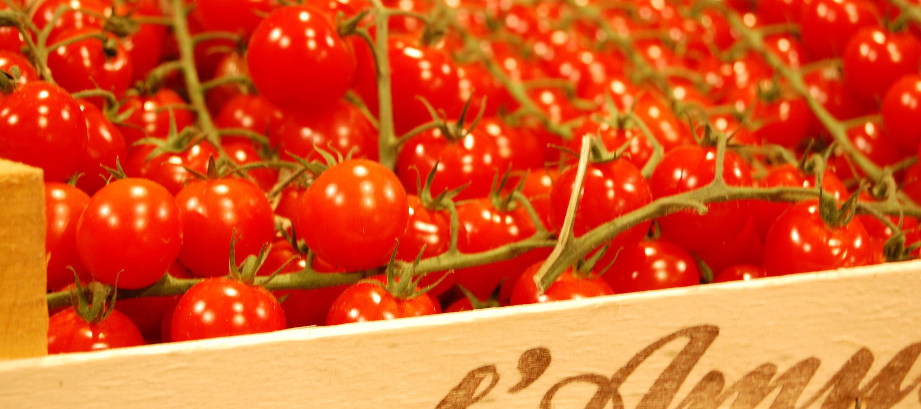 Banner-Tomaten