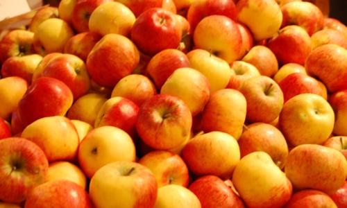 Obst Oderwald Äpfel