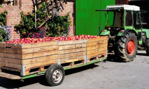 Obst Oderwald Apfelernte
